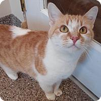 Adopt A Pet :: Star - Cloquet, MN