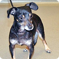 Adopt A Pet :: 357059 LF - Wildomar, CA
