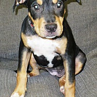 Adopt A Pet :: Delilah - Eastpoint, FL