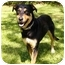 Photo 4 - Doberman Pinscher/Labrador Retriever Mix Dog for adoption in Mocksville, North Carolina - Juneau