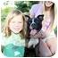 Photo 1 - American Pit Bull Terrier Mix Dog for adoption in Trucksville, Pennsylvania - Fendi*
