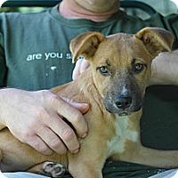 Adopt A Pet :: Frasier - Philadelphia, PA