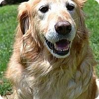 Adopt A Pet :: Tyson - Foster, RI