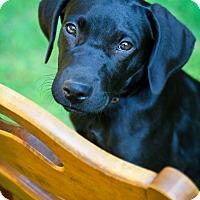 Adopt A Pet :: Zara - Bradenton, FL