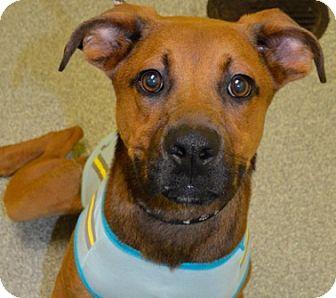 Shepherd (Unknown Type) Mix Dog for adoption in Charlotte, North Carolina - Timmy