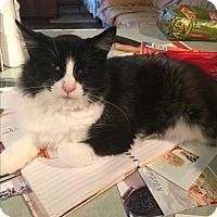 Adopt A Pet :: Snickers - Kelso/Longview, WA