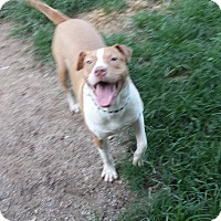 Adopt A Pet :: Clyde - Lafayette, IN