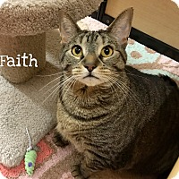 Adopt A Pet :: Faith - Foothill Ranch, CA