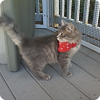 Adopt A Pet :: Jax- Adoption Pending - Arlington, VA