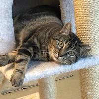 Adopt A Pet :: Addie - Lafayette, IN