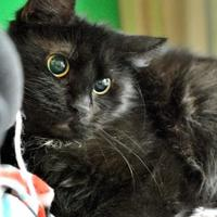 Adopt A Pet :: Nancy - Redmond, OR