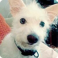 Adopt A Pet :: Mia - Hockessin, DE
