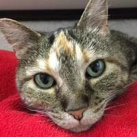Adopt A Pet :: P.F. - Fort Collins, CO
