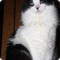 Adopt A Pet :: Cowboy - Rawlins, WY