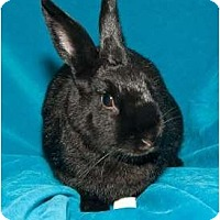 Dutch Mix for adoption in Los Angeles, California - Jenny