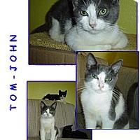 Adopt A Pet :: Tom-John - Bunnell, FL