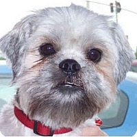 Adopt A Pet :: Remy - Mays Landing, NJ