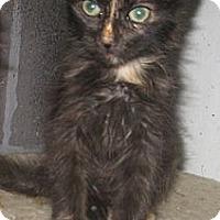 Adopt A Pet :: Sassafras - Dallas, TX
