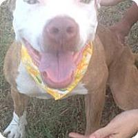Adopt A Pet :: Flygirl - McAllen, TX