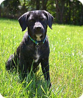Basset Hound/Pug Mix Dog for adoption in Huntsville, Alabama - Niko B