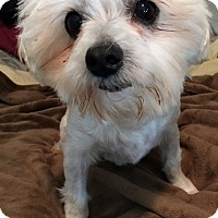 Adopt A Pet :: Lionel - Toronto, ON