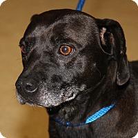 Adopt A Pet :: Max (Neutered) - Marietta, OH