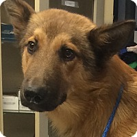 Adopt A Pet :: PAZ - Mount Holly, NJ