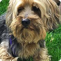Adopt A Pet :: Grady - Lorain, OH