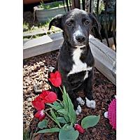 Adopt A Pet :: Crackle - Tempe, AZ