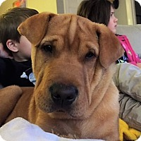 Adopt A Pet :: Chorizo  -Courtesy List - Richmond, VA