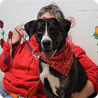 Adopt A Pet :: Bruce-Prison Graduate - Elyria, OH