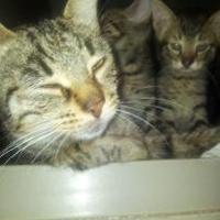 Adopt A Pet :: BREE - St. Thomas, VI