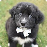Adopt A Pet :: Kat - Frisco, TX