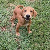 Adopt A Pet :: Ryan - Ashburn, VA