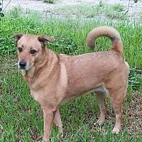 Adopt A Pet :: Hannah - Lakeland, FL
