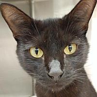 Adopt A Pet :: Margaret - Orlando, FL