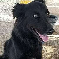 Adopt A Pet :: Vader - Las Vegas, NV