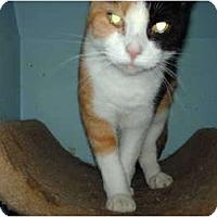 Adopt A Pet :: Cali - Hampton, CT