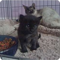 Adopt A Pet :: Jake - Mobile, AL