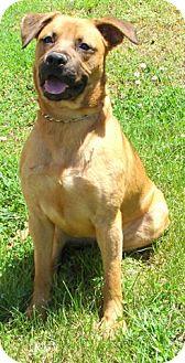 German Shepherd Dog Mix Dog for adoption in Providence, Rhode Island - Yuma