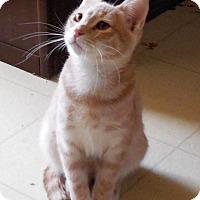 Adopt A Pet :: Lowell - Bentonville, AR