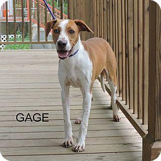 Hound (Unknown Type) Mix Dog for adoption in Slidell, Louisiana - Gage
