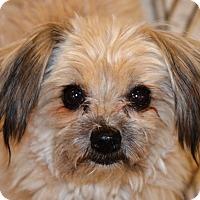 Adopt A Pet :: Harp - Simi Valley, CA