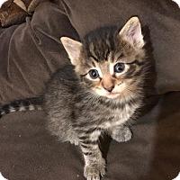 Adopt A Pet :: 2 kitties - Pasadena, CA