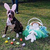 Adopt A Pet :: Jessie - Summerville, SC