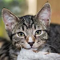 Adopt A Pet :: Toby - Oakland, CA