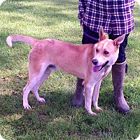 Adopt A Pet :: Sandy - Metamora, IN