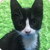 Adopt A Pet :: Edgard - Chula Vista, CA