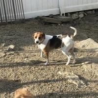 Adopt A Pet :: Tala - Leicester, MA