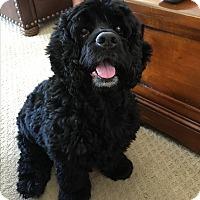 Adopt A Pet :: Asia - Scottsdale, AZ